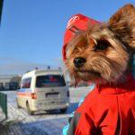 Czujny Pies ratowniczy